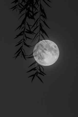 月光下的树影图片