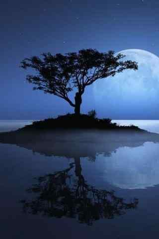 大树下月光倒影图