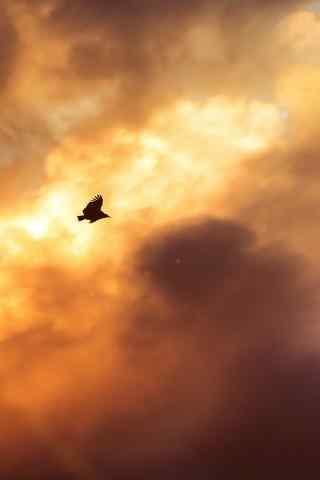 小鸟飞过云层手机