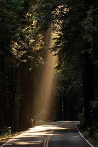 阳光透过树木射在