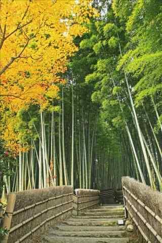 竹林小道风景手机壁纸