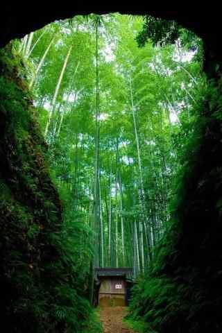 唯美的竹林手机壁纸