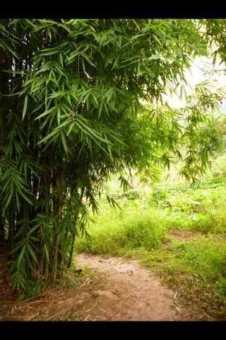 清新的竹林小道风景壁纸
