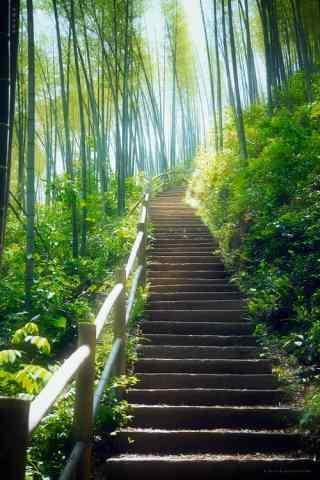 竹林风景手机壁纸