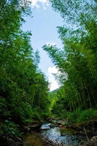 唯美竹林风景手机壁纸