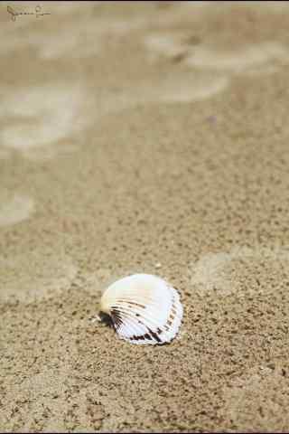 沙滩上的贝壳手机