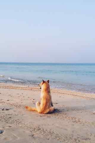 小狗坐在沙滩上看