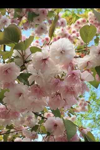 唯美春日踏青鲜花