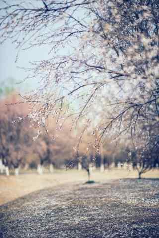唯美桃花林风景手
