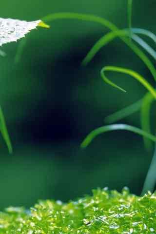 小清新绿色风景高