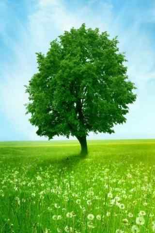 绿色唯美风景高清