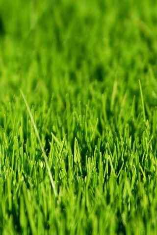 护眼绿色草地风景