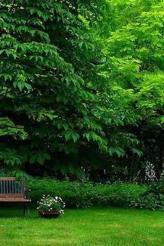 绿色护眼风景手机