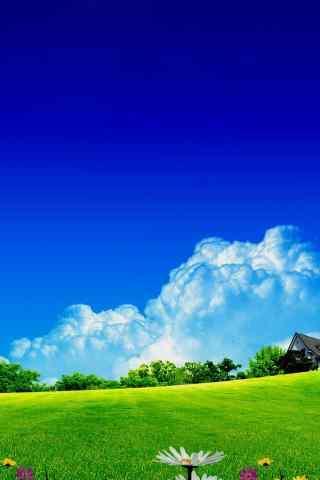 唯美绿色草地风景