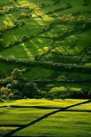 绿色田野风景高清