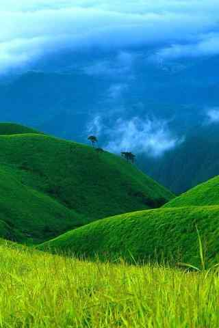护眼绿色风景高清