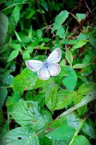 莫干山了绿色草地上的蝴蝶手机壁纸