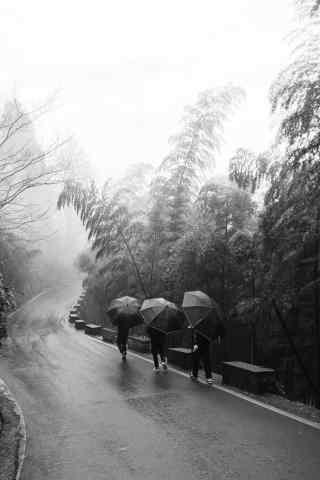 雨中莫干山林中行走人手机壁纸