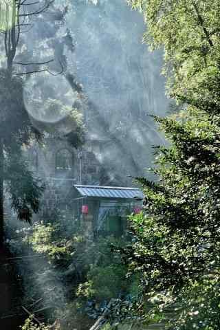 安静的莫干山林间手机壁纸