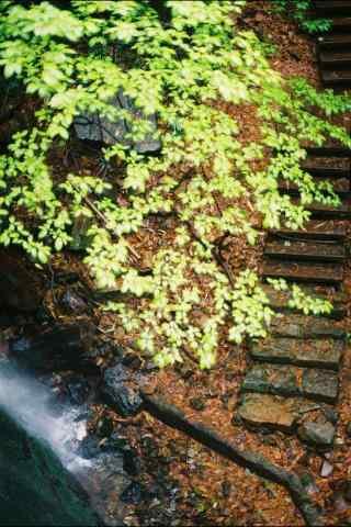 莫干山的树林小道手机壁纸