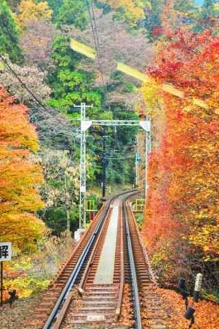 小清新秋日电车轨道摄影图片