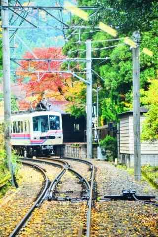 绿色树林中驶出电车摄影图片
