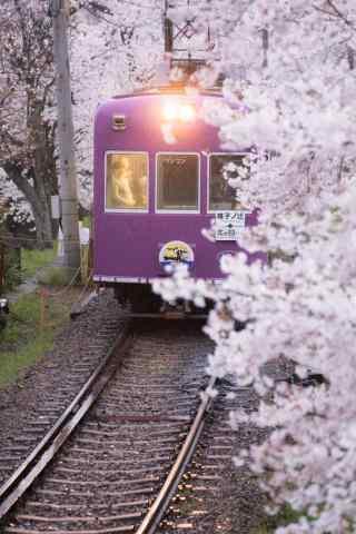 电车穿越过樱花林手机壁纸