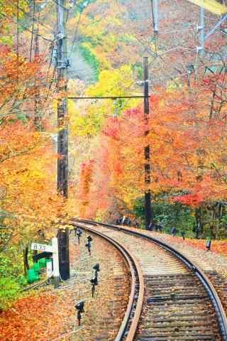 秋日落叶铺满电车轨道桌面壁纸