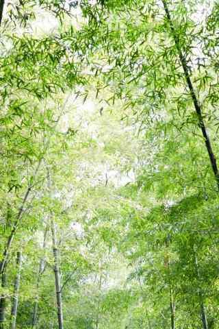 绿色护眼南山竹海护眼手机壁纸