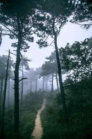 唯美小清新庐山树林手机壁纸