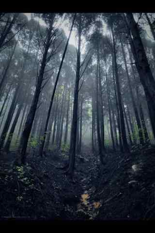 庐山幽静的树林手机壁纸