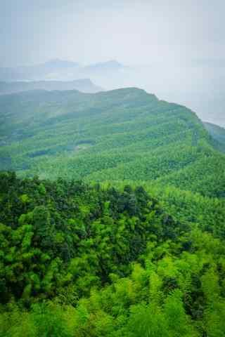 绿色护眼蜀南竹海优美风景手机壁纸