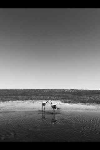 黑龙江风景黑白摄影图片