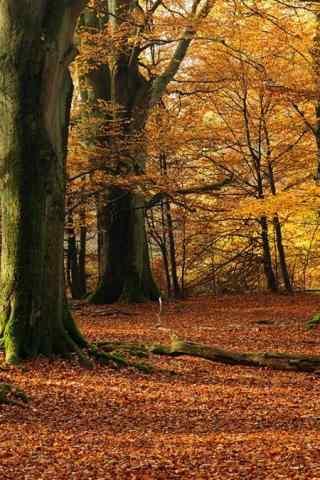 唯美的黄色森林风景高清手机壁纸
