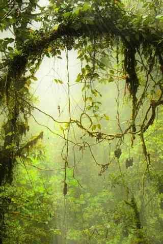 清新唯美森林风景高清手机壁纸
