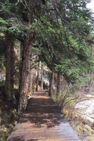 小清新原始森林手机壁纸