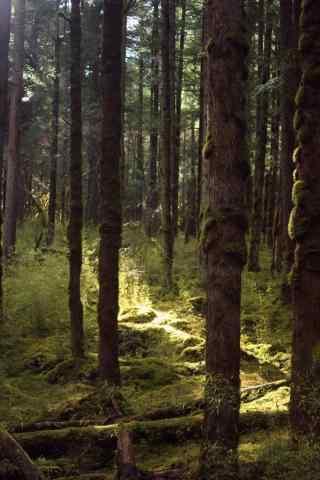 美丽的原始森林护眼手机壁纸