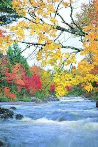 美丽的森林风景高清手机壁纸
