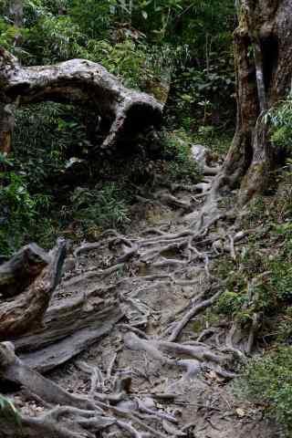 神奇的原始森林手机壁纸