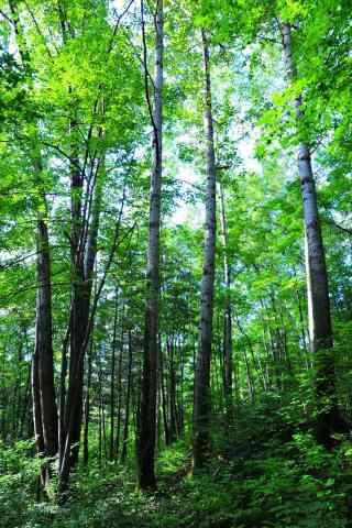清新原始森林护眼手机壁纸