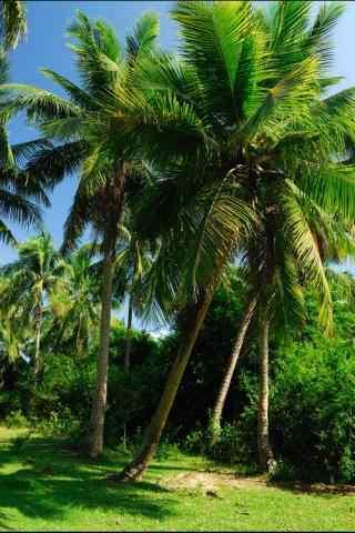 小清新椰林风景手机壁纸