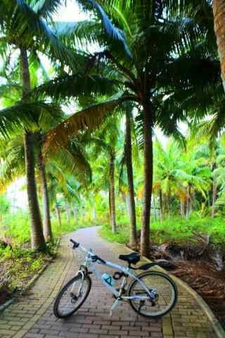 绿色清新椰林风景手机壁纸