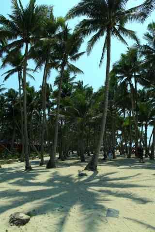 清新椰林风景手机壁纸