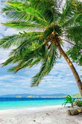 清爽的夏日椰林风景手机壁纸