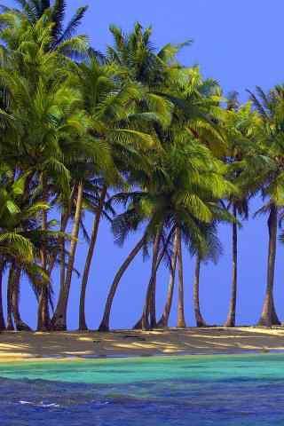 清新美丽的椰林风景手机壁纸