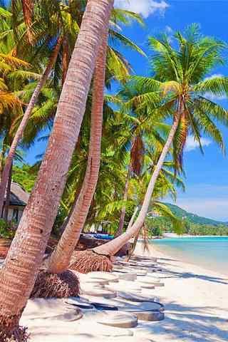 唯美的椰林风景手机壁纸