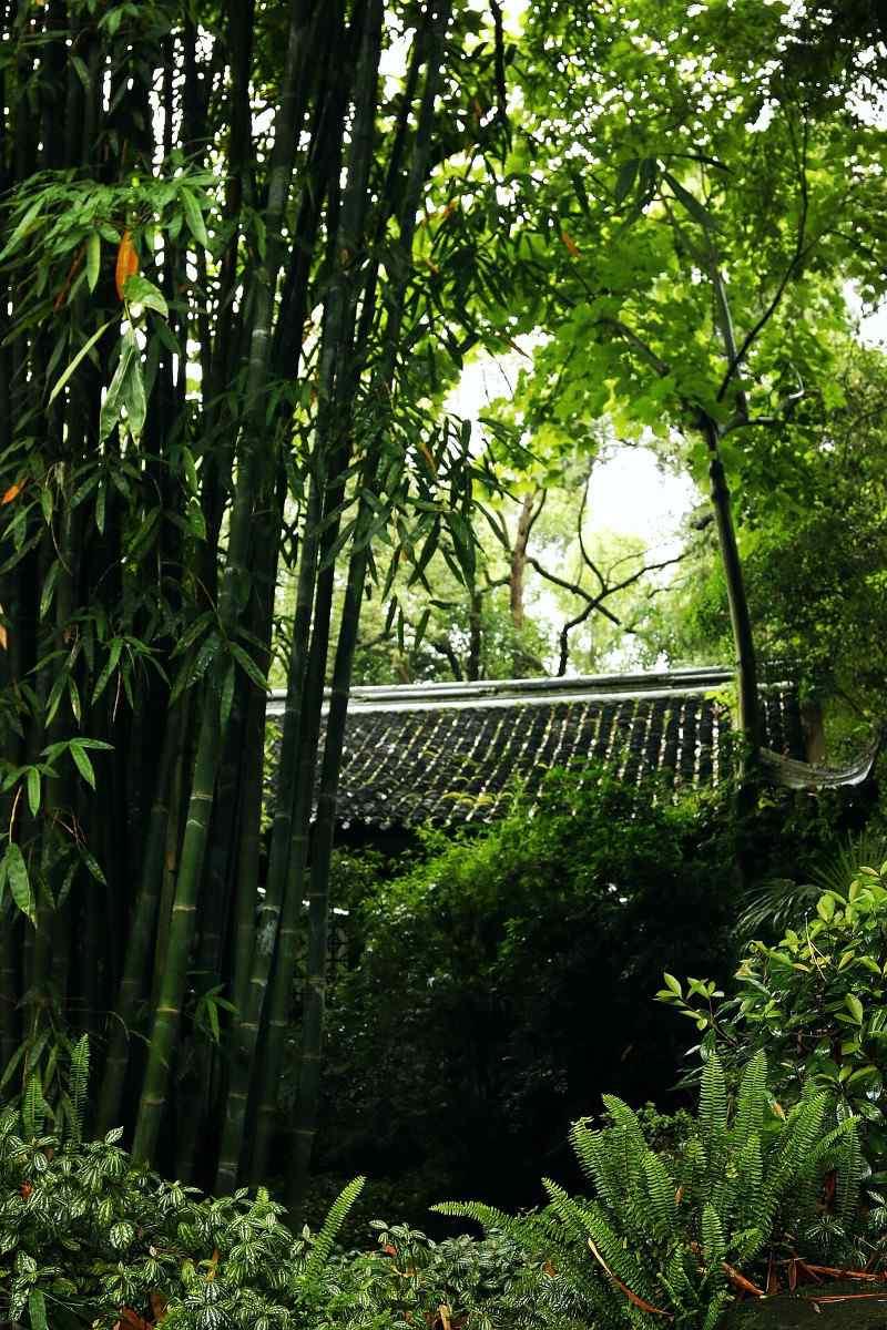 清新竹林风景手机壁纸