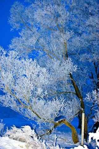 蓝天下的吉林雾凇手机壁纸