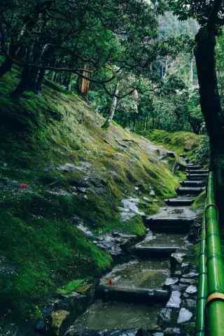 小清新绿色风景手