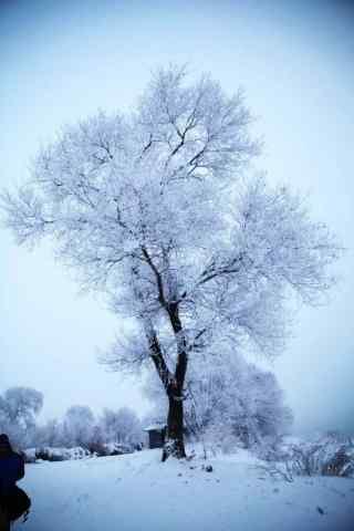 美丽的吉林雾凇手机壁纸